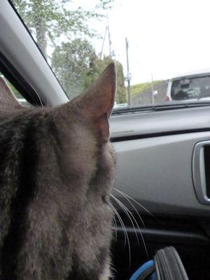 猫連れ移動