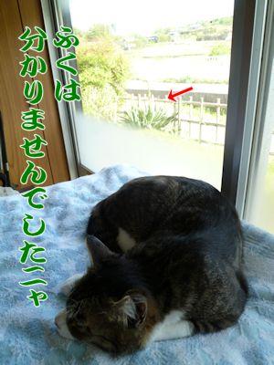 フテ寝する猫の先に見えたもの
