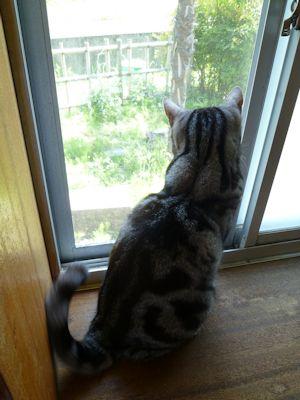 出窓の警備員