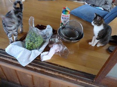 何をしてもわらわらと寄ってくる猫ら