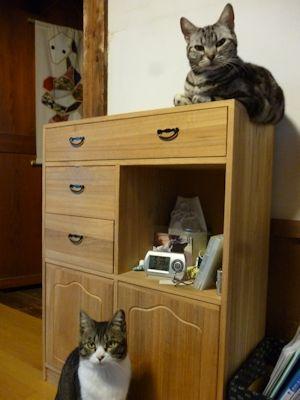 猫らは元気に食っちゃ寝