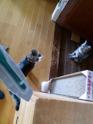 寄ってくる猫ら