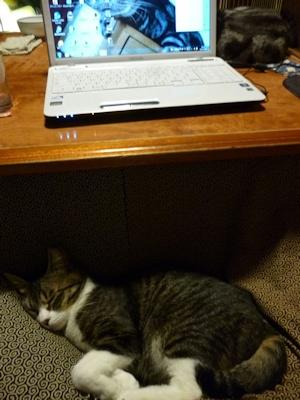 ヒトの寝待ちをする猫ら1
