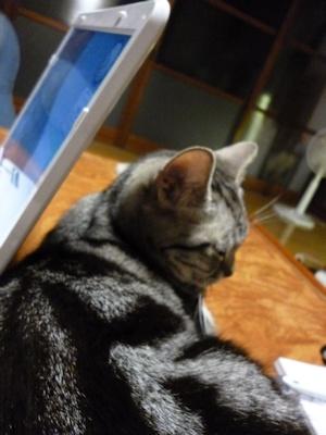 ヒトの寝待ちをする猫ら3