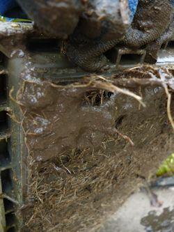 育苗箱の裏の根っこ