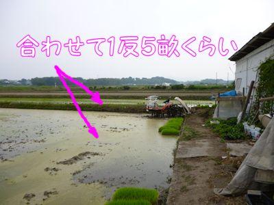実家の田んぼ