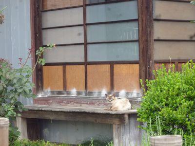 やまねこを起こす猫