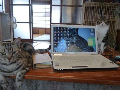 ご飯1時間前の猫らとワタクシ