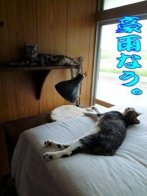 寝腐る猫ら