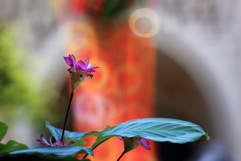 ミッキー広場の花