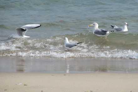 波とカモメ2