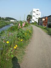 鶴見川の花々