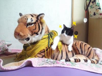 ネコ トラのコピー