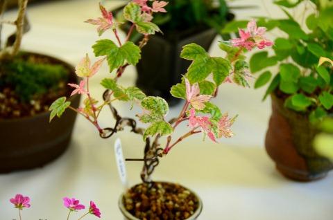 野葡萄の種類