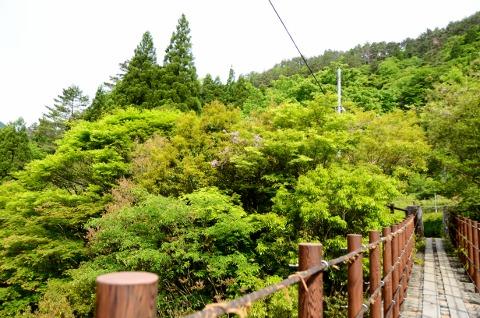 樅の木吊橋 (2)