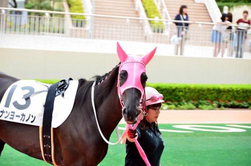 振り向いた馬さん