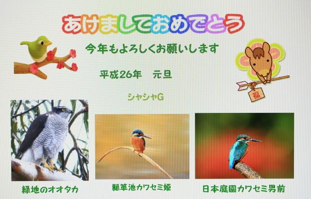 オオタカ10882_3_1