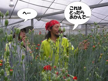 カーネーション収穫講習