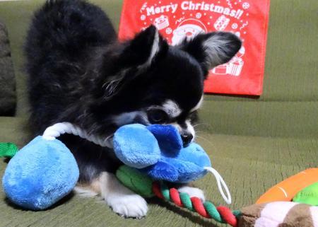 クリスマスプレゼントです♪