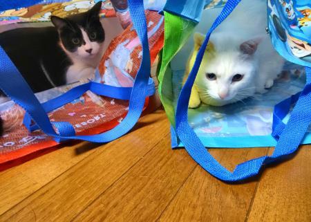 袋が好き~♪