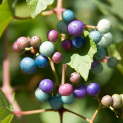 berry-4360.jpg