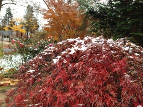 snow-2681.jpg