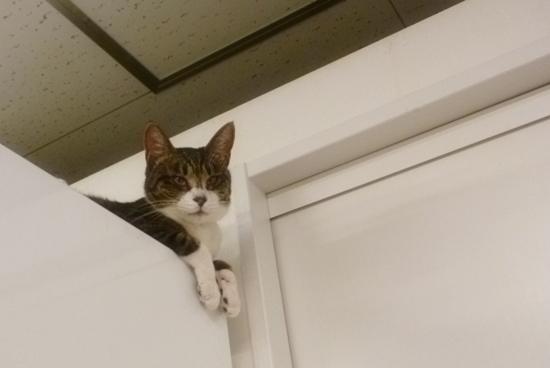 猫まるカフェ2