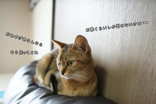 2_20130812232243968.jpg