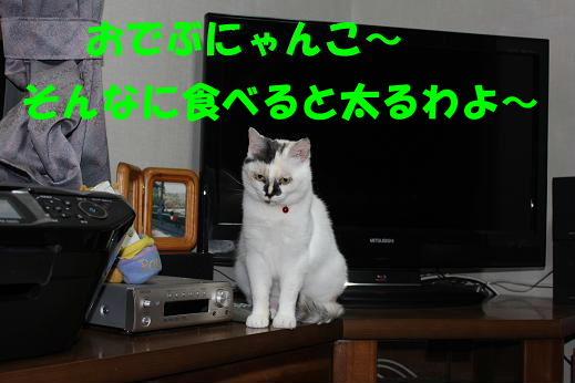 IMG_2670.jpg