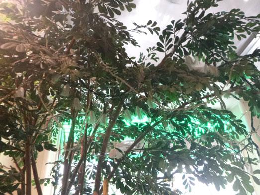 フルーフ・デゥ・セゾン季節のパフェの桃パフェ052