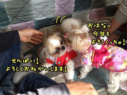 IMG_9668_20140102224807639.jpg