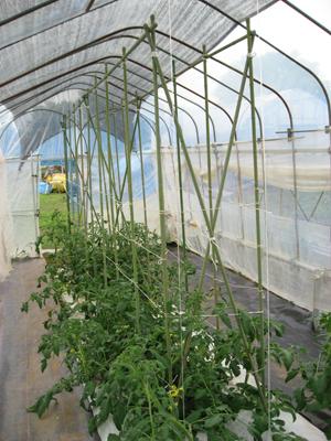 トマト農家1