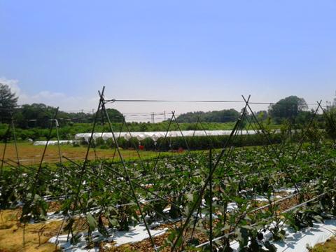農大の栽培実習