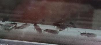 antswimmer1.jpg