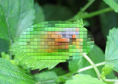 cicada02.jpg