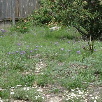 flowers04151301.jpg