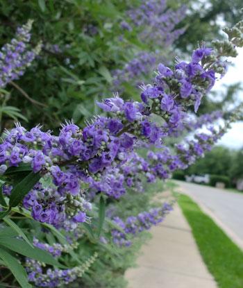 flowers06011302.jpg