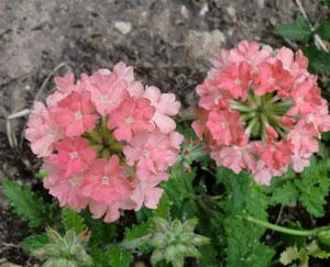 flowers06011308.jpg