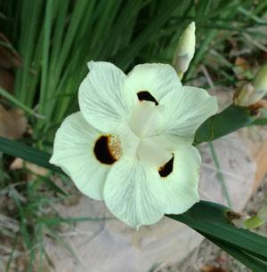 flowers06011309.jpg