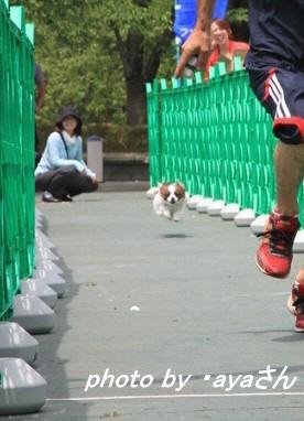 30メートルタイムトライアル(2)