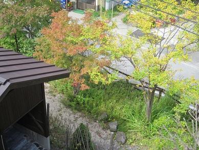 紫雲荘の裏庭