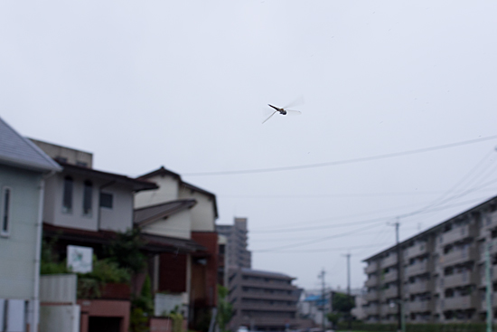 雨の日-11