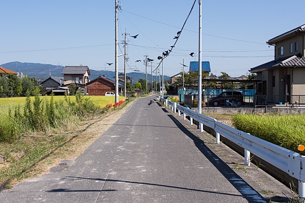 道行き-3