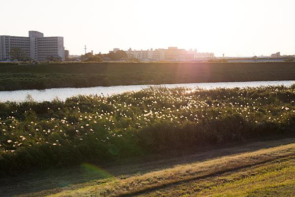 庄内川-2