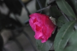 DSC_1115_20141109194902ff0.jpg