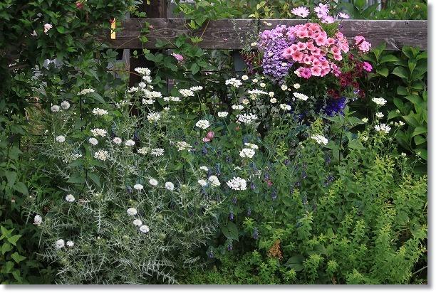 オルラヤ花壇
