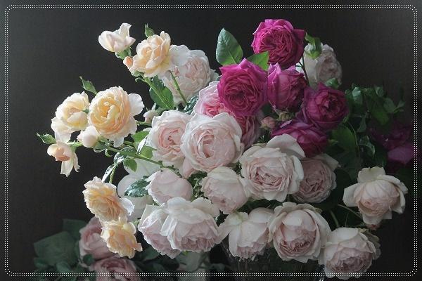 バラ切り花