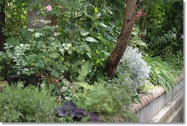 南面花壇 1