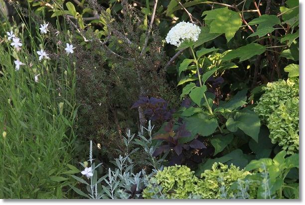 花木花壇 アナベル