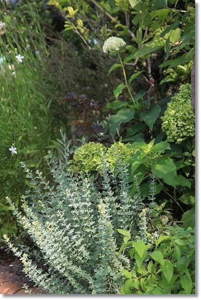 花木花壇 ロータスプリムストーン